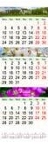 Drievoudige kalender voor April May en Juni 2017 met beelden Royalty-vrije Stock Afbeeldingen