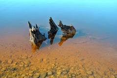Drift wood Stock Images