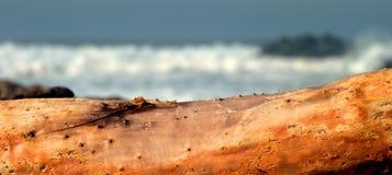 Drift Wood Royalty Free Stock Photography
