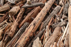 Drift Wood. A pile of drift wood on the beach Stock Images