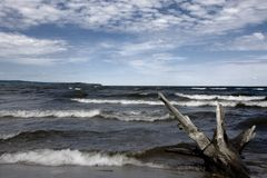 Drift wood. Photo of a beach of a large lake with drift wood on the beach Royalty Free Stock Photos
