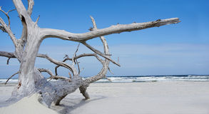 Drift wood along beautiful sandy beach Stock Photos