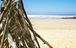 Drift wood on the beach Royalty Free Stock Photo