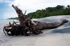 Drift wood on Beach Royalty Free Stock Photography