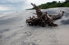 Drift wood on Beach Royalty Free Stock Photos