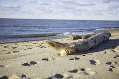 Drift Wood on the beach Stock Photos