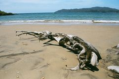 Drift Wood On Beach. Coopers Beach - New Zealand - Drift wood Royalty Free Stock Images