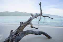 Drift wood on the beach Stock Images