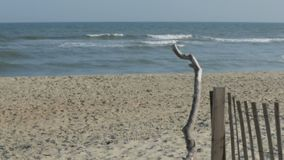 Drift wood on the beach. Pan up of drift wood on the sand beach to the waves of the ocean stock video footage