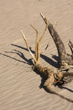 Drift wood on beach in sunshine. Drift wood on beach in sea sand in sunshine Royalty Free Stock Images