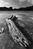 Drift wood Stock Image