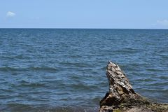 Drift wood cast by ocean waves to sea shore stock photography