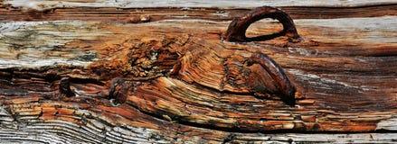 Drift wood Royalty Free Stock Photo