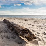 Drift wood, close. A perspective of driftwood on a beach Royalty Free Stock Images