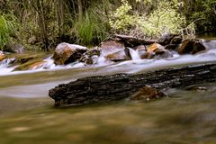 Drift wood in a creek stock photography