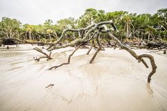 Drift wood on hunting island south carolina stock photography