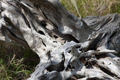 Drift wood Stock Photo