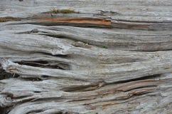 Drift wood log detail at an Oregon beach  1 Royalty Free Stock Photos