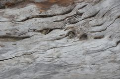 Drift wood log detail at an Oregon beach 2 stock image