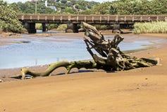 Drift Wood Log at Empty Lagoon Against Railway Bridge Royalty Free Stock Images