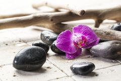 Drift wood and mineral design for soft spa decor Stock Photos