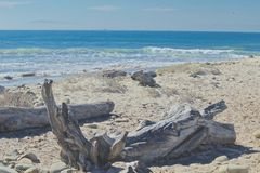 Drift wood ocean. Drift wood on a sunny beach at the Pacific Ocean Stock Images
