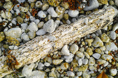 Drift wood pebble texture Royalty Free Stock Photography