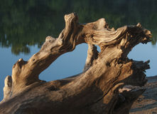 Drift wood Royalty Free Stock Images