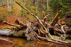 Drift wood in a river Stock Photo
