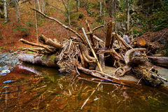 Drift wood in a river Stock Photos