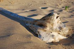 Drift wood on shore of Lake Michigan Stock Photos