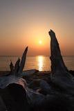 Drift wood & the sun Royalty Free Stock Photos
