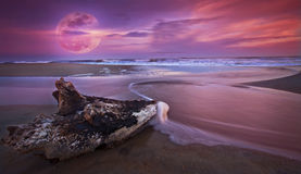 Drift wood at sunset on sandy beach and full moon. Rise on the Atlantic shore Royalty Free Stock Images