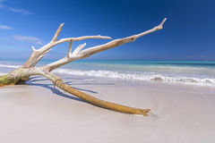 Drift wood on tropical beach Royalty Free Stock Images