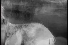 Driftigt ungt föl för häst in i floden stock video