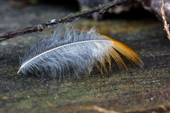 Drifting Feather Royalty Free Stock Photography