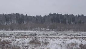 Drifting ice floe on the river stock video