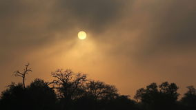 Drifting mist at sunrise. With tree silhouettes, Sabie-Sand nature reserve, South Africa stock video footage