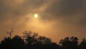 Drifting mist at sunrise Stock Photos
