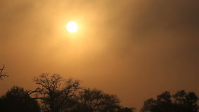 Drifting mist at sunrise. With tree silhouettes, Sabie-Sand nature reserve, South Africa stock footage