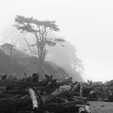 Driftwood και ιουνίπερος στο Pacific Coast Στοκ Εικόνες