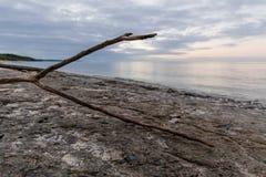 Driftwood μια συννεφιάζω ημέρα στοκ φωτογραφίες με δικαίωμα ελεύθερης χρήσης