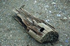 Driftwood που μοιάζει με ένα ζωικό κρανίο Στοκ φωτογραφία με δικαίωμα ελεύθερης χρήσης