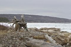 driftwood στοκ εικόνες