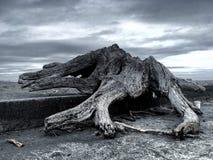 Driftwood σε έναν λιμενοβραχίονα Στοκ φωτογραφία με δικαίωμα ελεύθερης χρήσης
