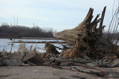 Driftwood σε ένα έλος ποταμών Στοκ φωτογραφία με δικαίωμα ελεύθερης χρήσης