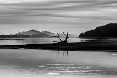 Driftwood σε μια παραλία σε γραπτό Στοκ φωτογραφίες με δικαίωμα ελεύθερης χρήσης
