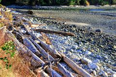 Driftwood σε μια παραλία στο χρόνο ηλιοβασιλέματος στοκ εικόνα με δικαίωμα ελεύθερης χρήσης
