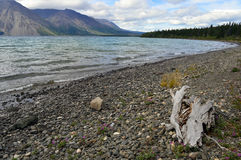 Driftwood στην ακτή λιμνών της Kathleen στο έδαφος Yukon, Καναδάς Στοκ Φωτογραφία