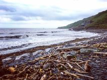 Driftwood στην παραλία μετά από τον τυφώνα Στοκ φωτογραφία με δικαίωμα ελεύθερης χρήσης